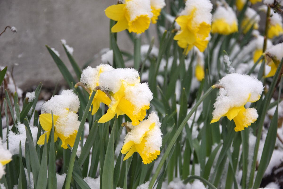 Snopet att påsken började med snö, och inte så lite snö.