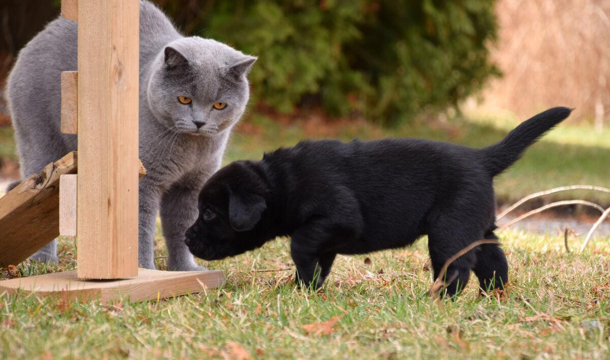 Vad är detta? Valpen var dock helt ointresserad av katten.