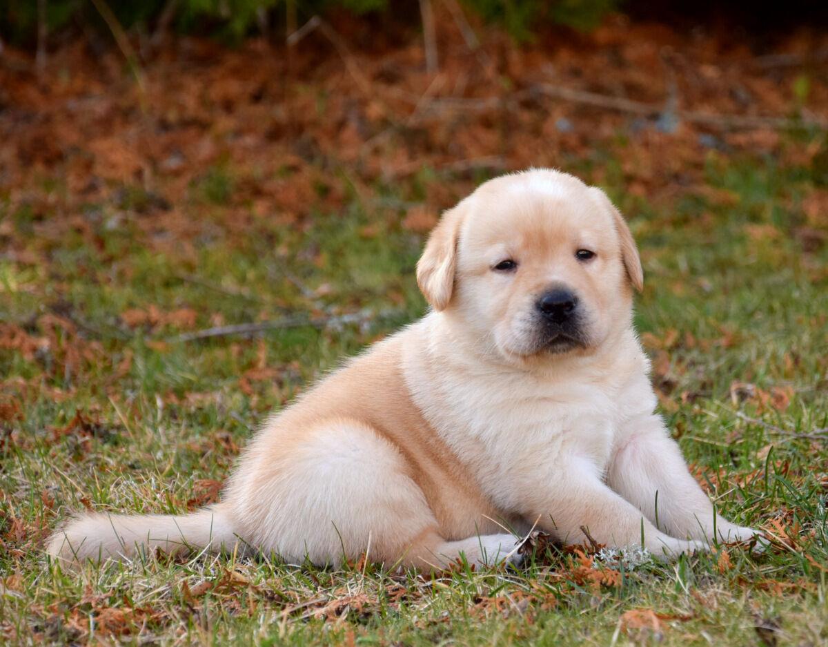 Charles Dickes har blivit lite trött och funderar på att somna mitt på gräsmattan.