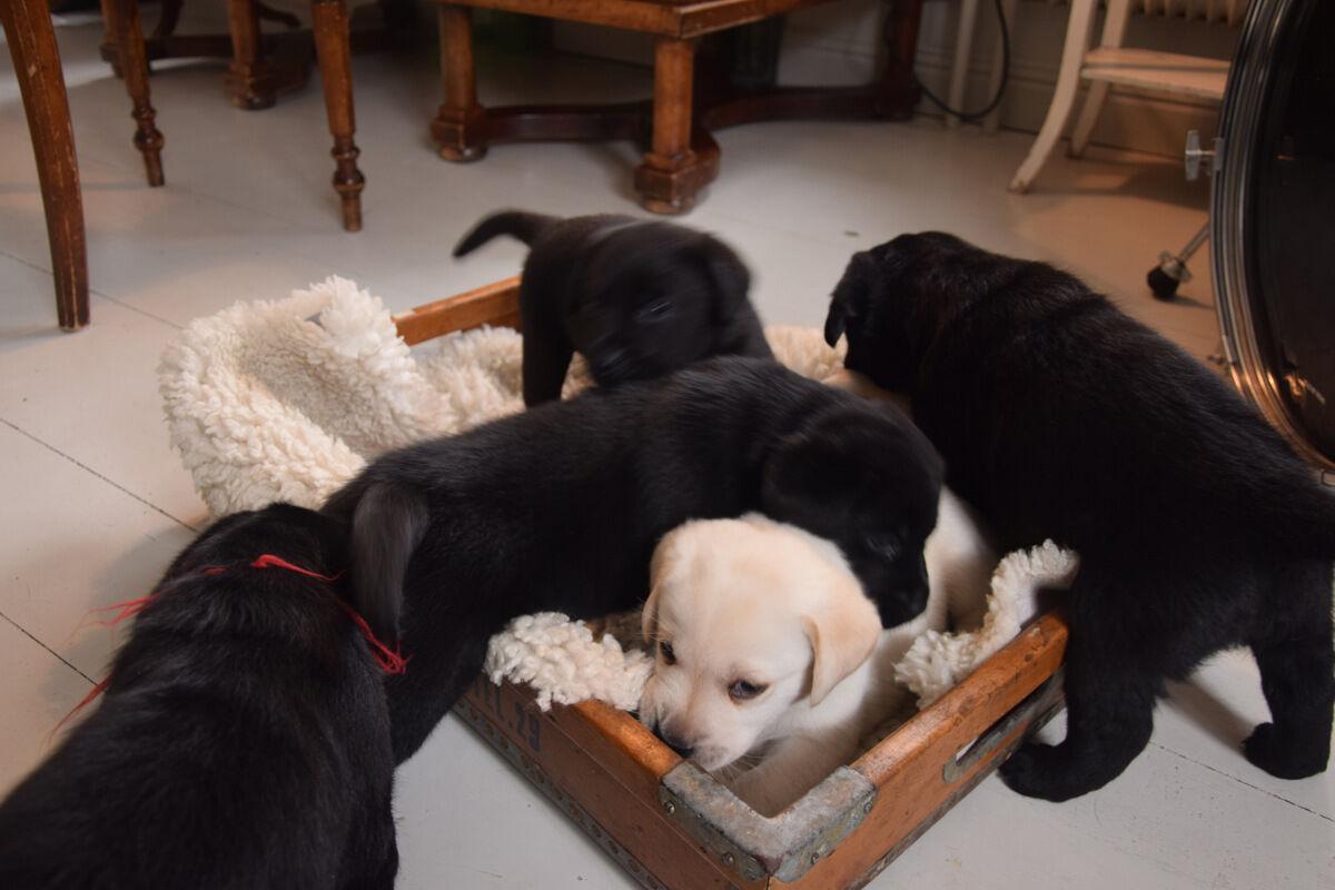 Tänk att de alla låg och sov i den här lådan för fyra veckor sedan.