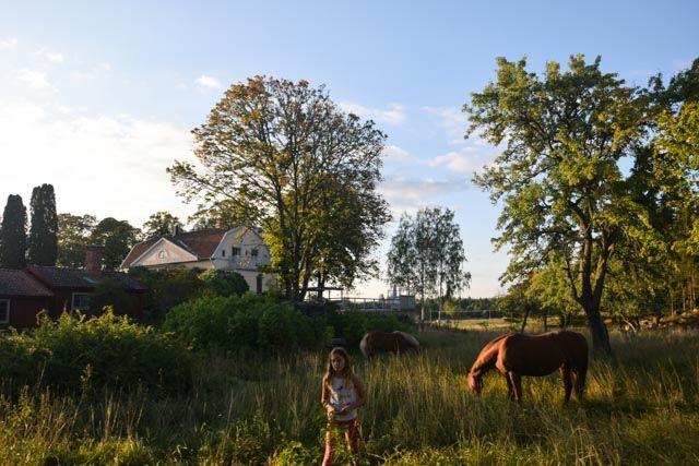 Än så länge får hästarna beta i fruktträdgården, men senare ska de gå på lösdrift i prästens gamla stall.