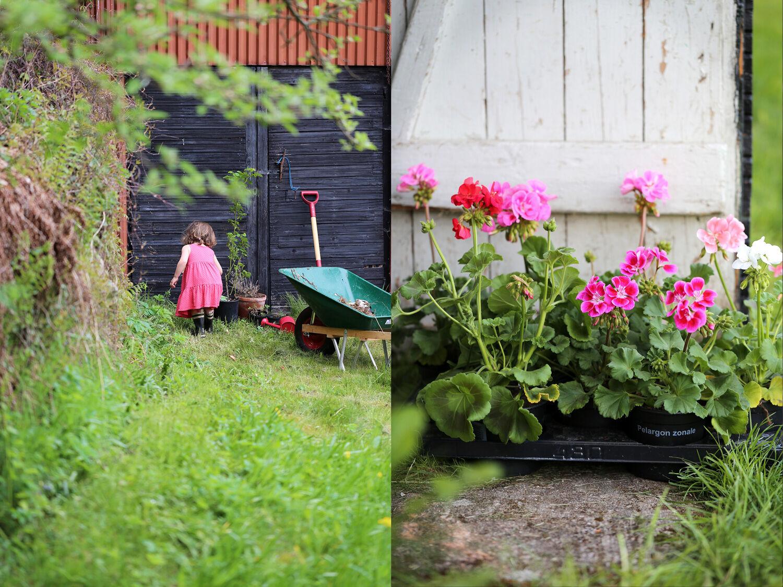 Trädgårdsfix och äggröra med ramslök. Ta till vara.