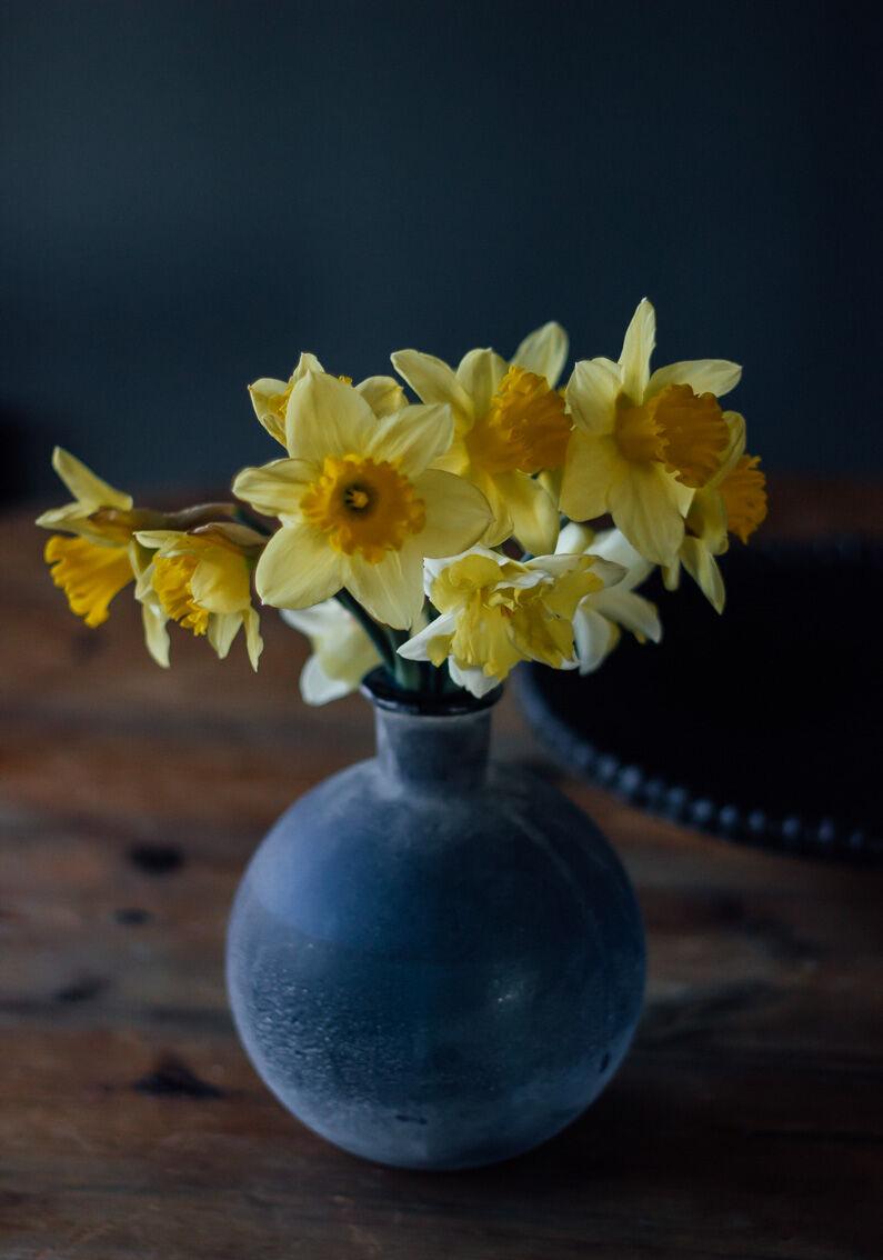 annacate-daffodils