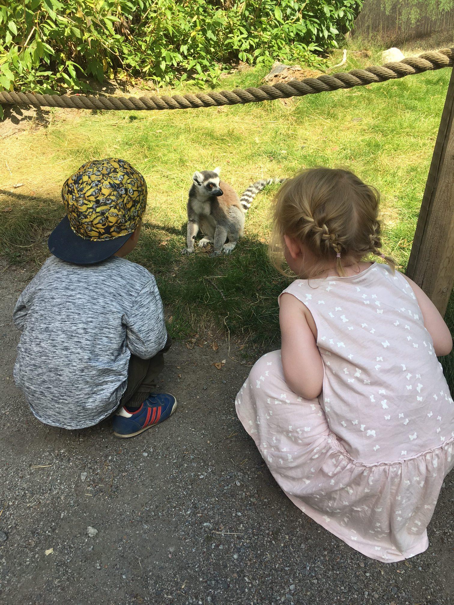 Parken-zoo-lemurer-igen