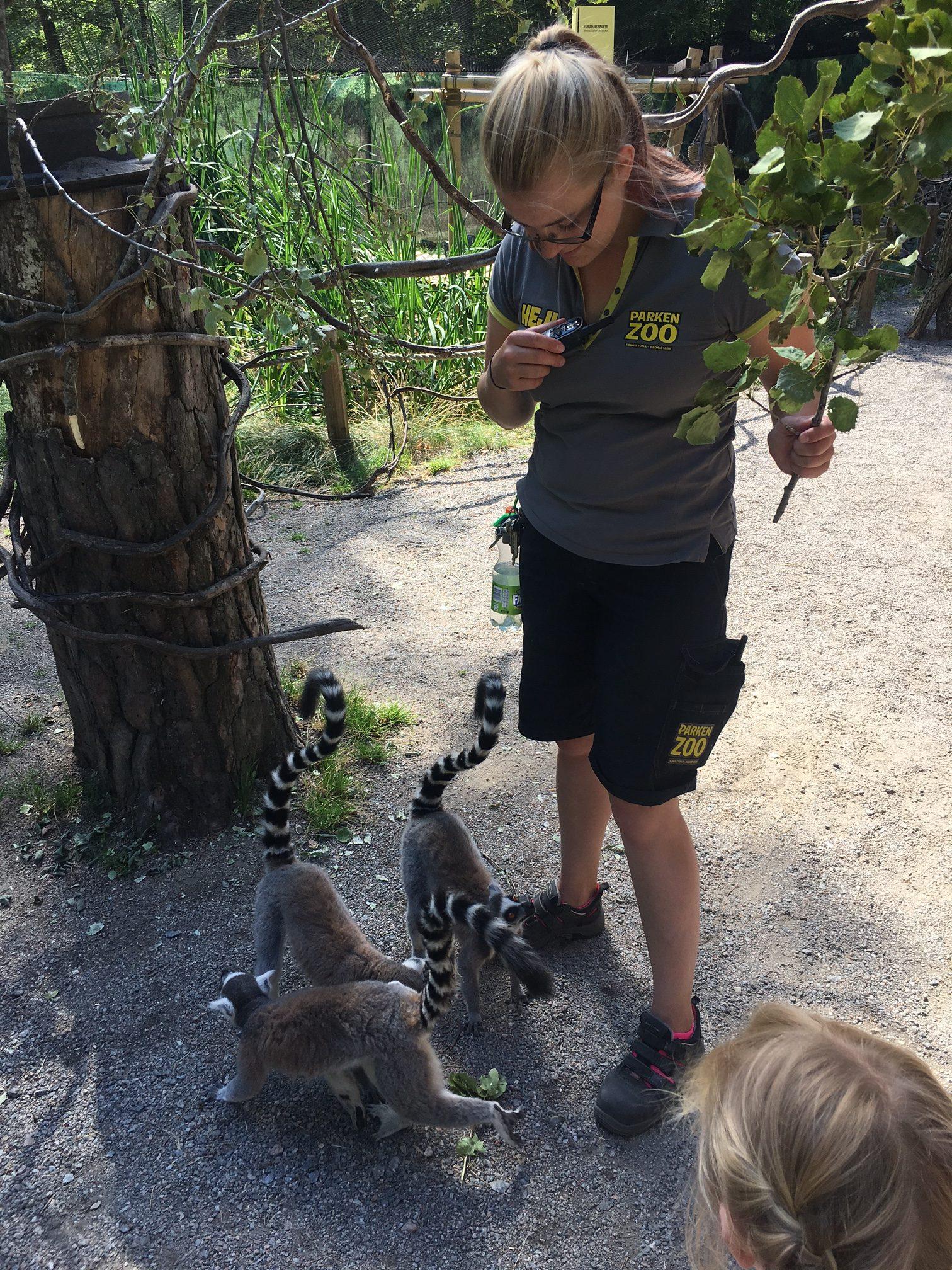 Parken-zoo-lemurer