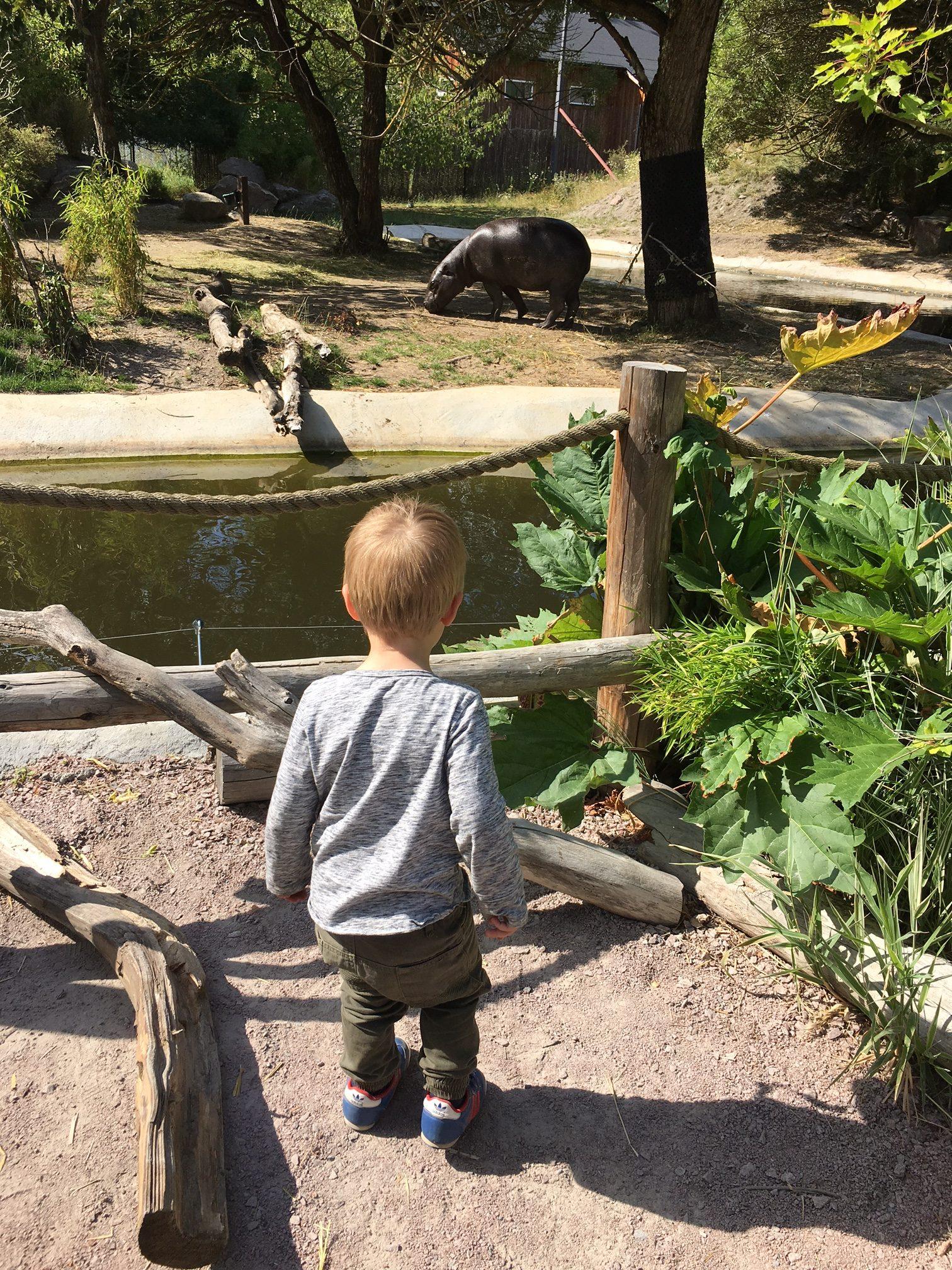 Parken-zoo-miniflodhäst