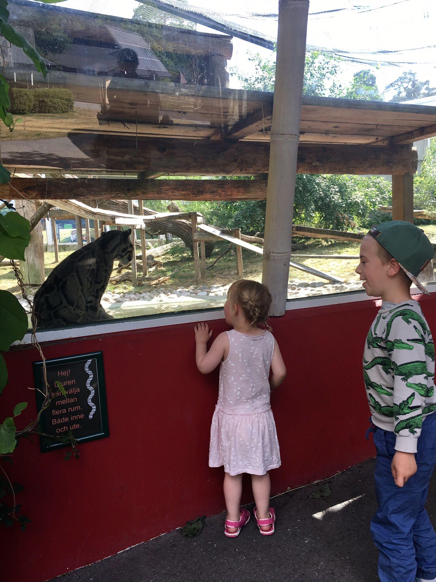 Parken-zoo-katt
