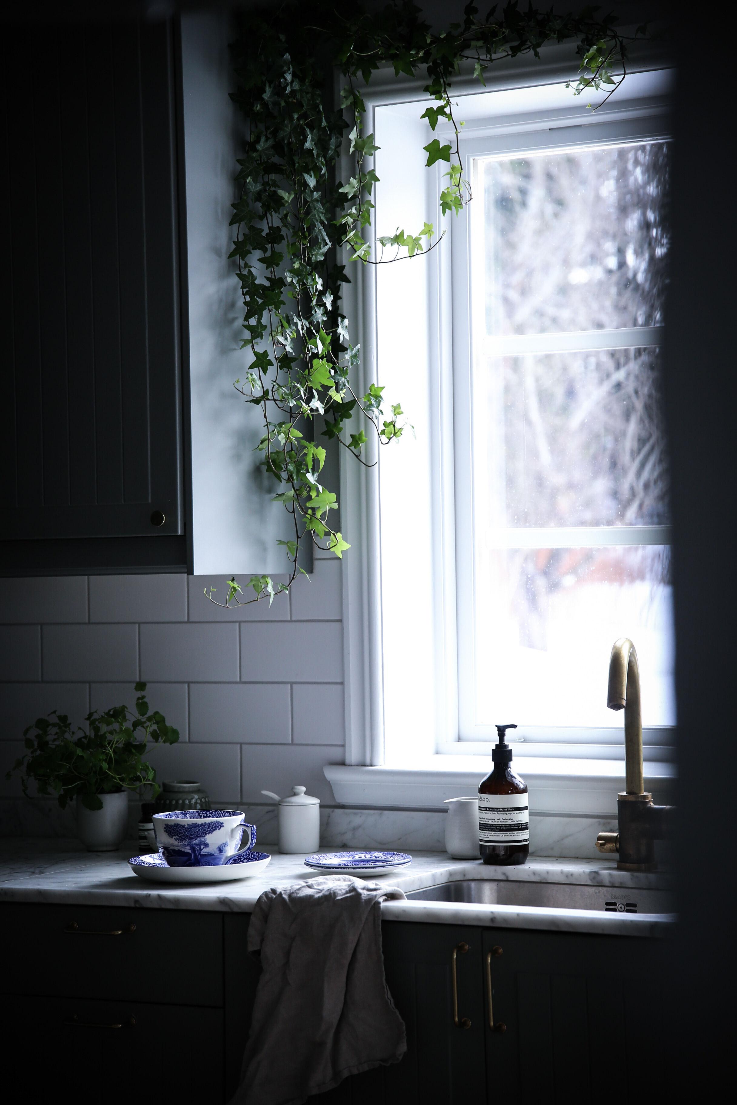 klättrande växter inomhus
