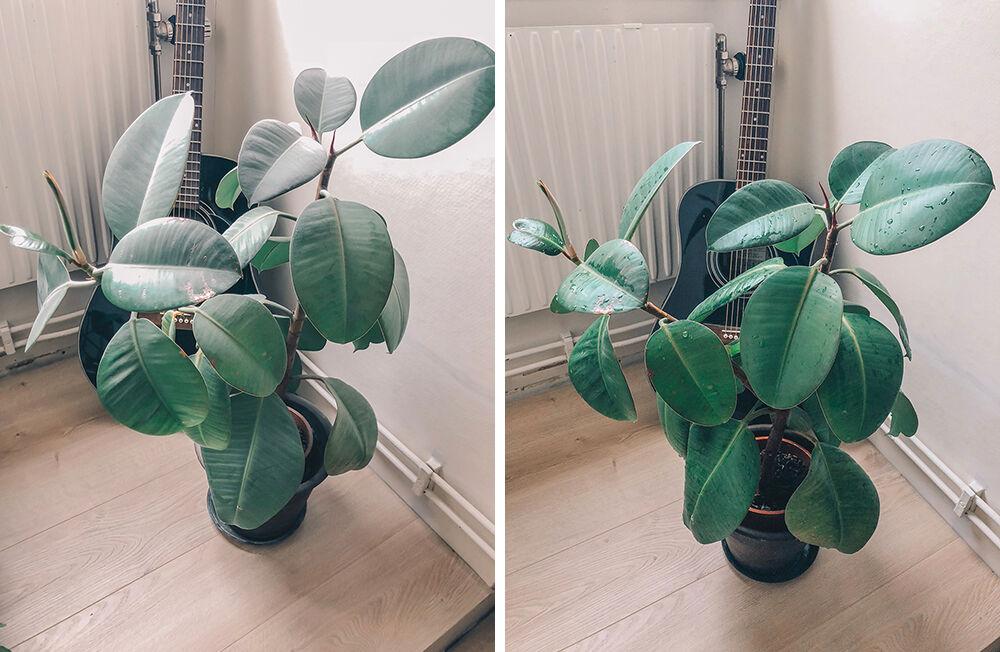 före efter växter