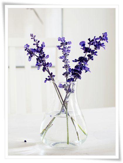 Bild: Simplicity - På vårt matsalsbord i detta nu. Stäppsalvia från trädgården i enkel glasvas från Ikea.