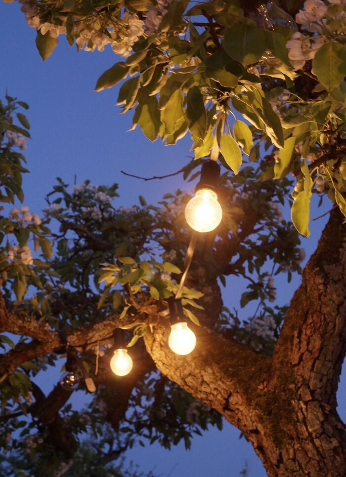 simplicity trädgård belysning 6