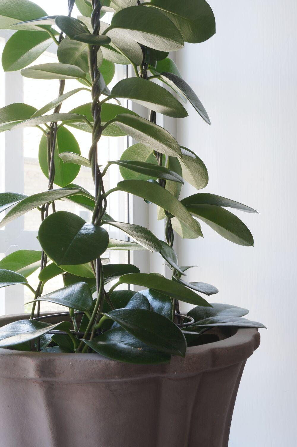Plantagen Höst matsal 2
