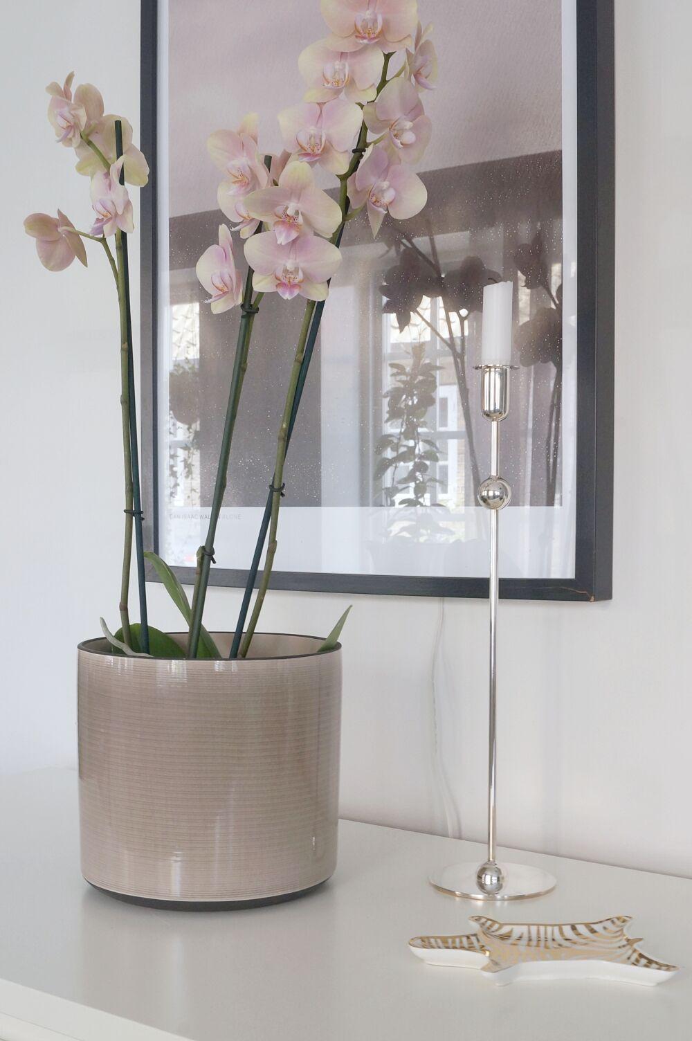 plantagen höst orkide