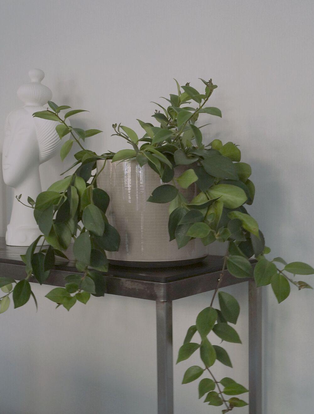 Plantagen höst stilleben