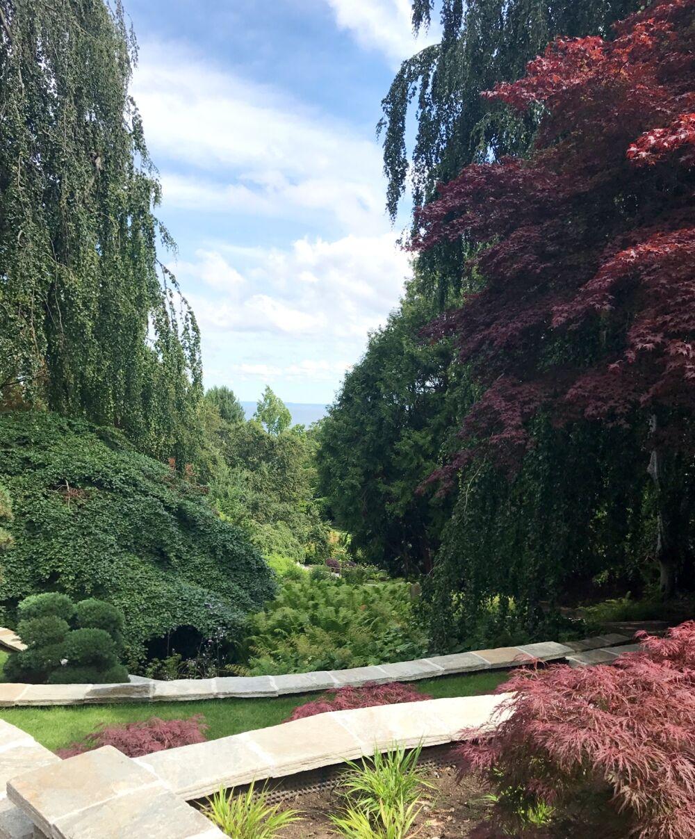 norrvikens trädgårdar addsimplicity japansk lönn