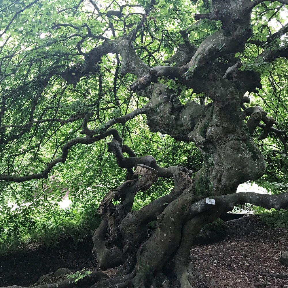 norrvikens trädgårdar addsimplicity träd