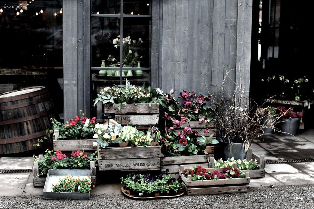 zetas trädgård_myrberg