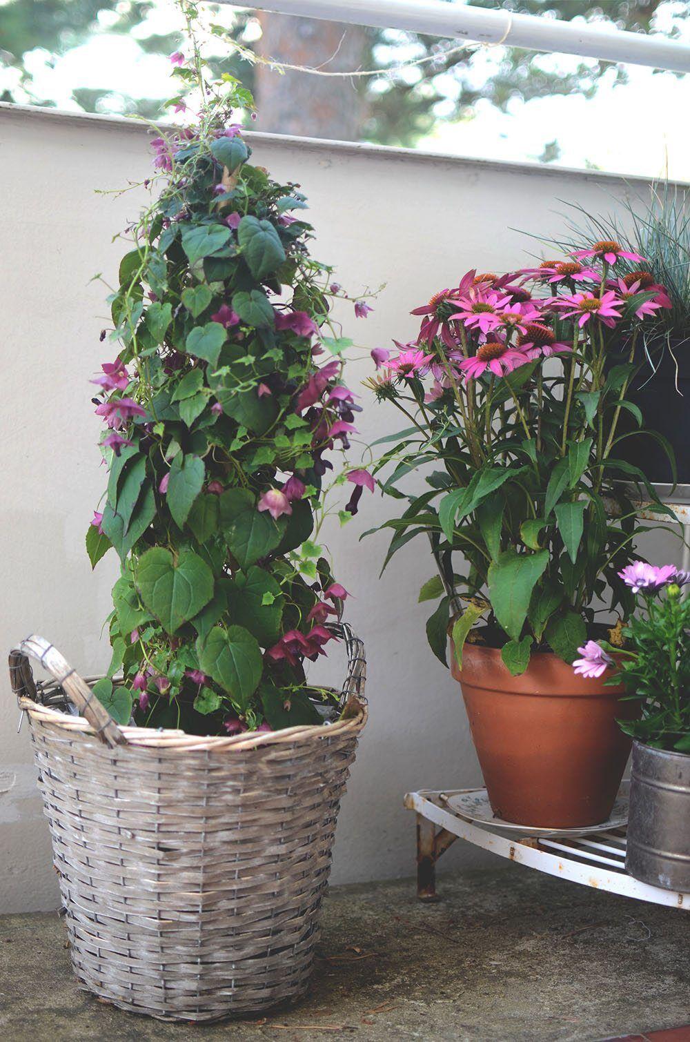 blommor_uteplats