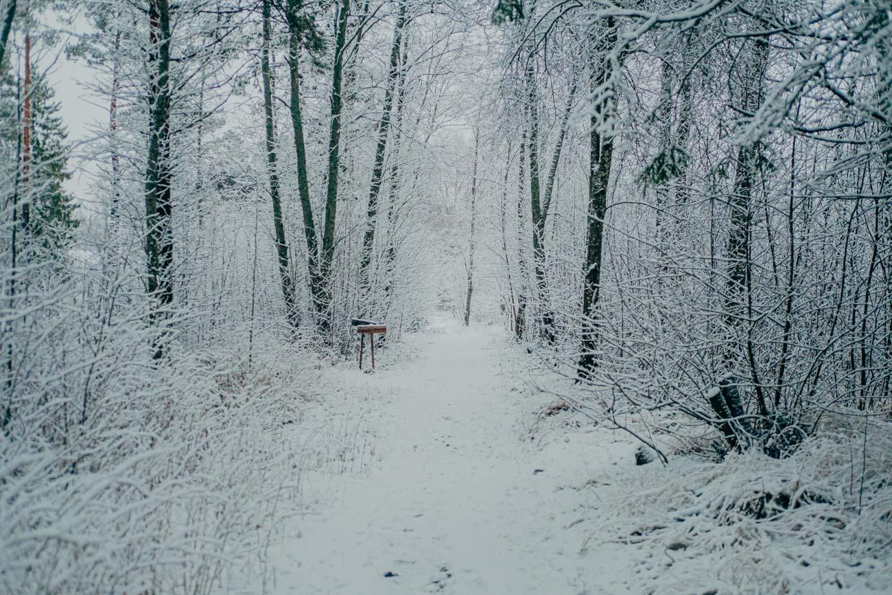 Snön-kom-till-byn-14