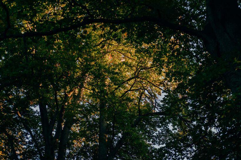 Djurgården-Oktober-10