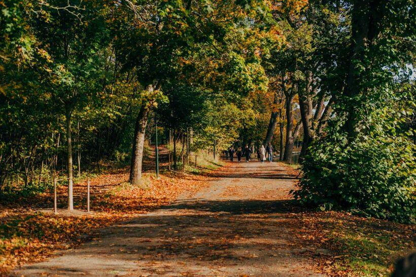 Djurgården-Oktober-2