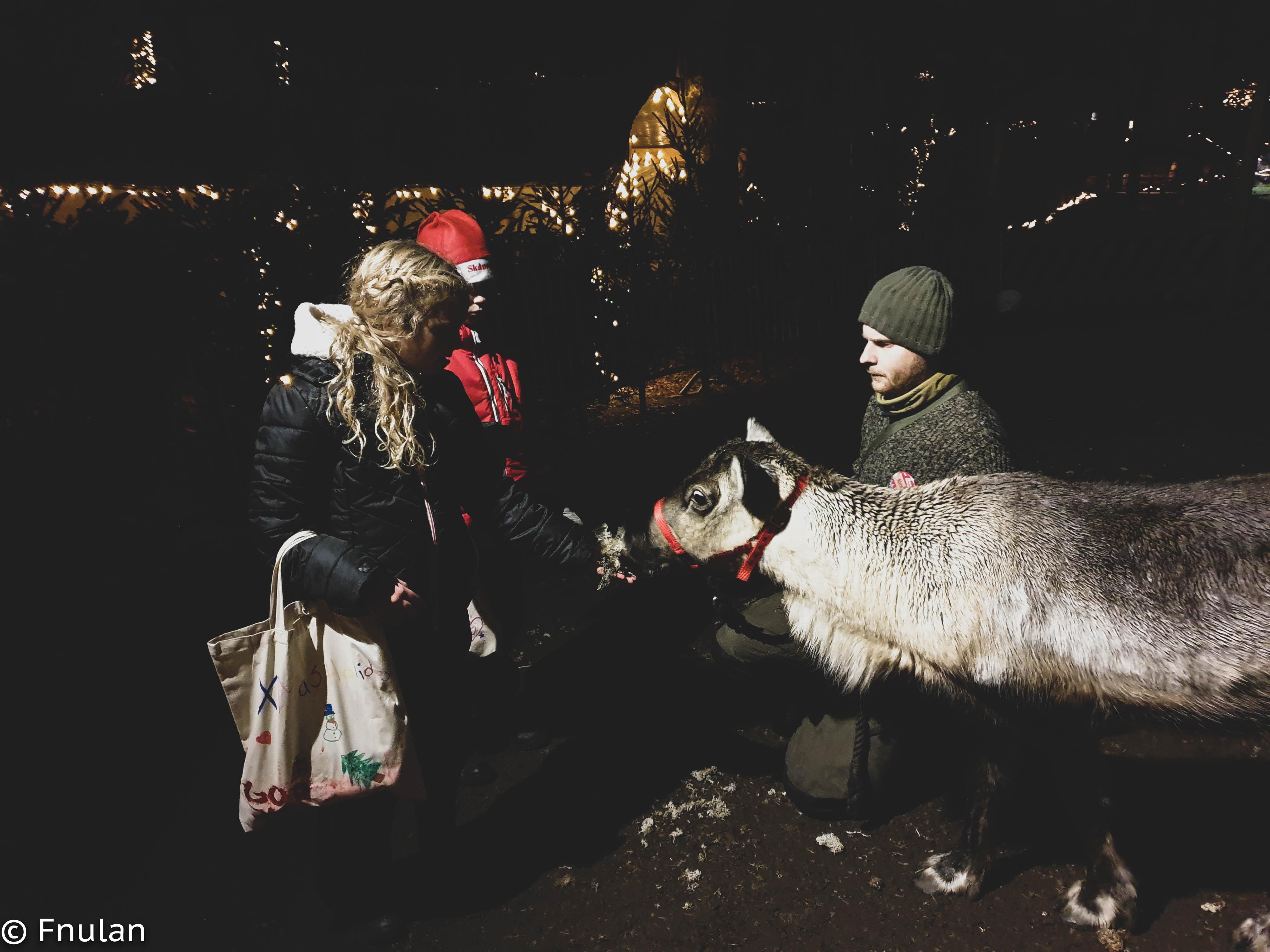 Skånes djurpark-21