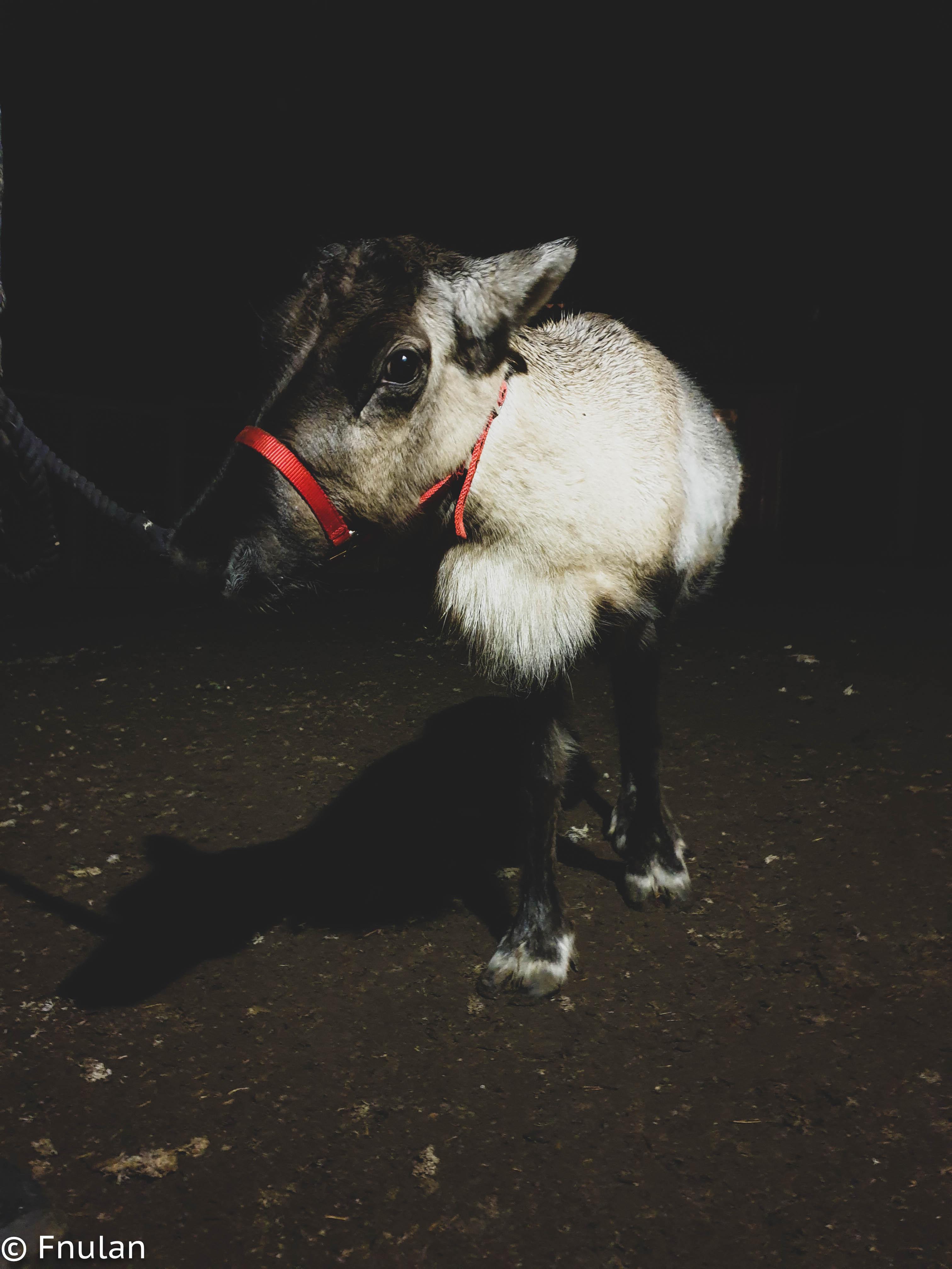 Skånes djurpark-22