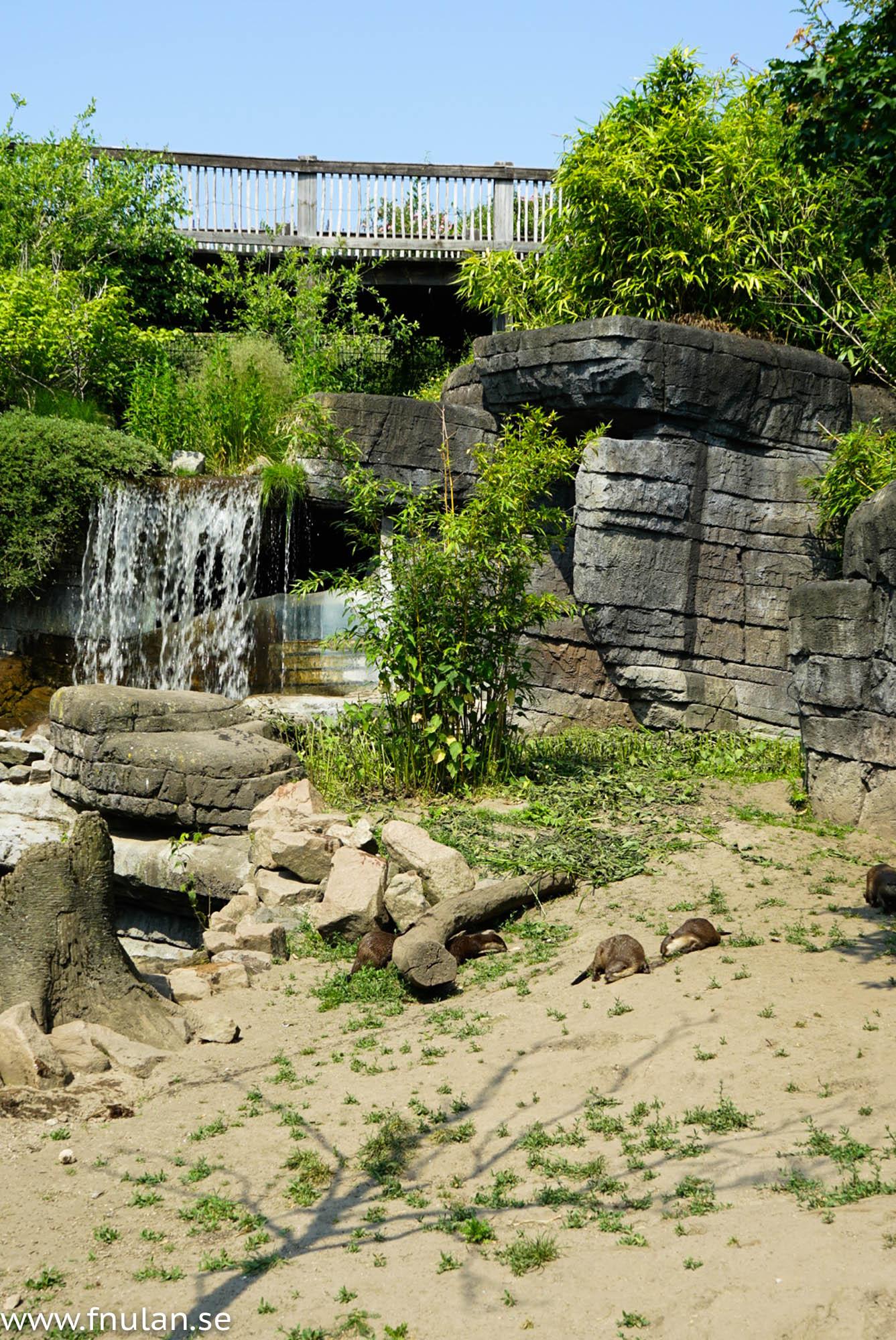 Ree park safari-13