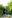 Jasmund Nationalpark_-2