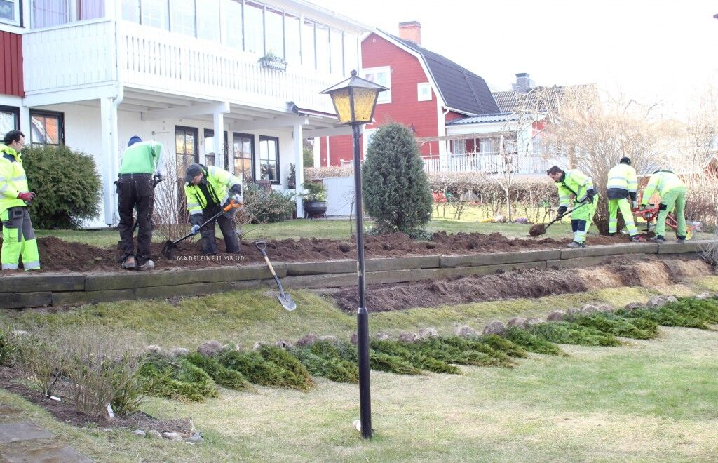 trädgård17