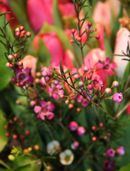 tulpaner_blommor_snittblommor_flora_tulpanbukett