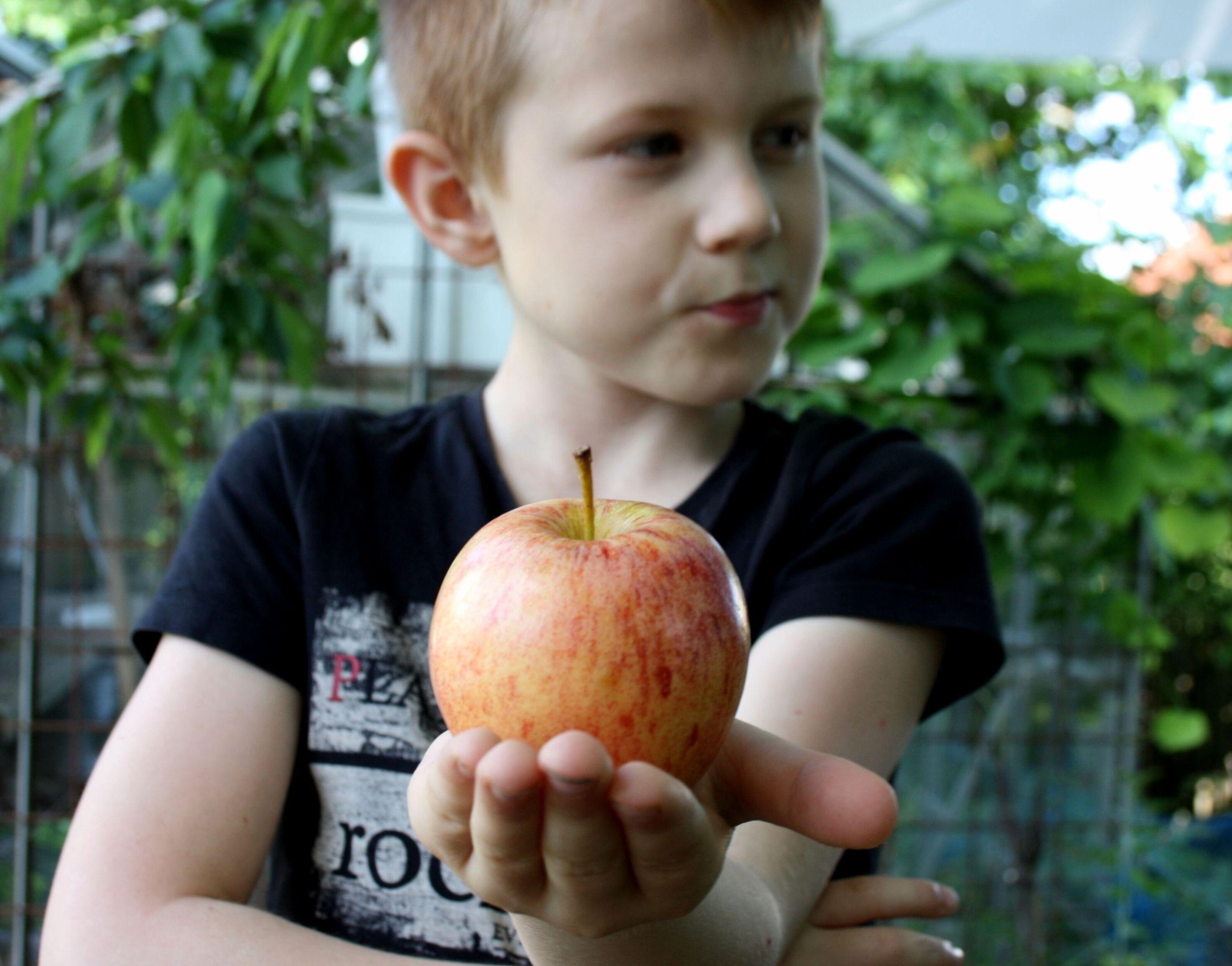 bästa äppelrecepten