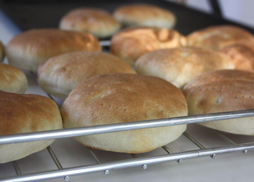 brödgaller