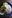 citronsåsen med torsk
