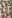 Crostini med nässel- och ricottaröra, tryffelsalami, pinjenötter och smörstekt salvia