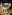 Coq au vin blanc i en vit le creuset gjutjjärnsgryta