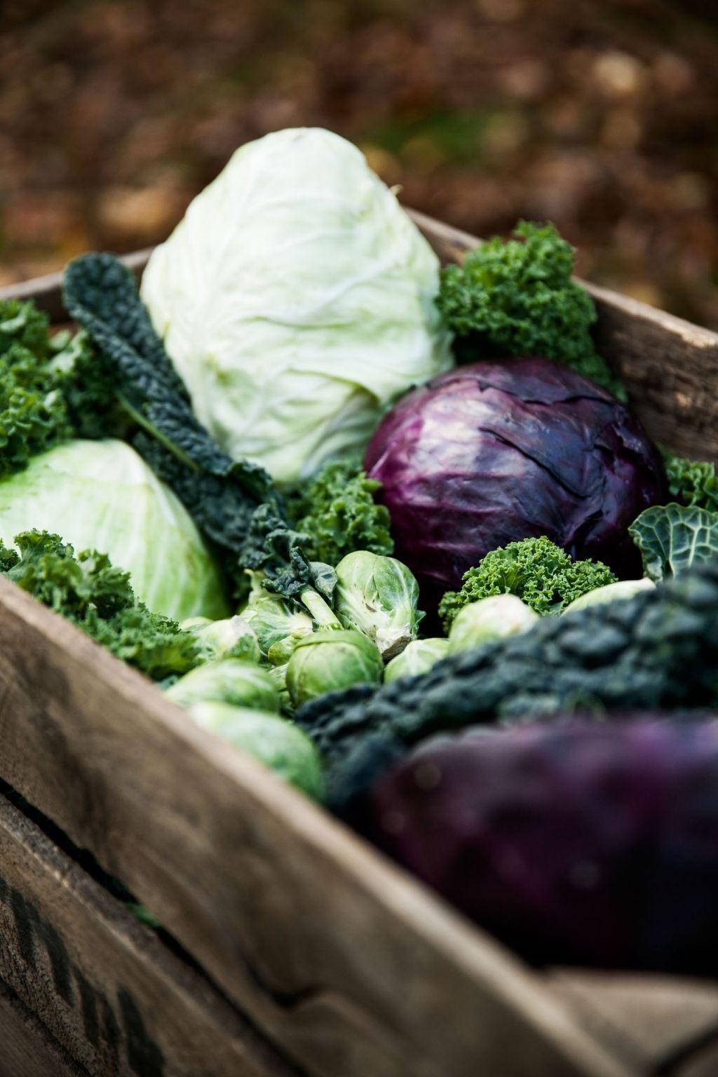 En gammal sliten trålåda fylld med grönsaker - vitkål, rödkål, svartkål, brysselkål, grönkål