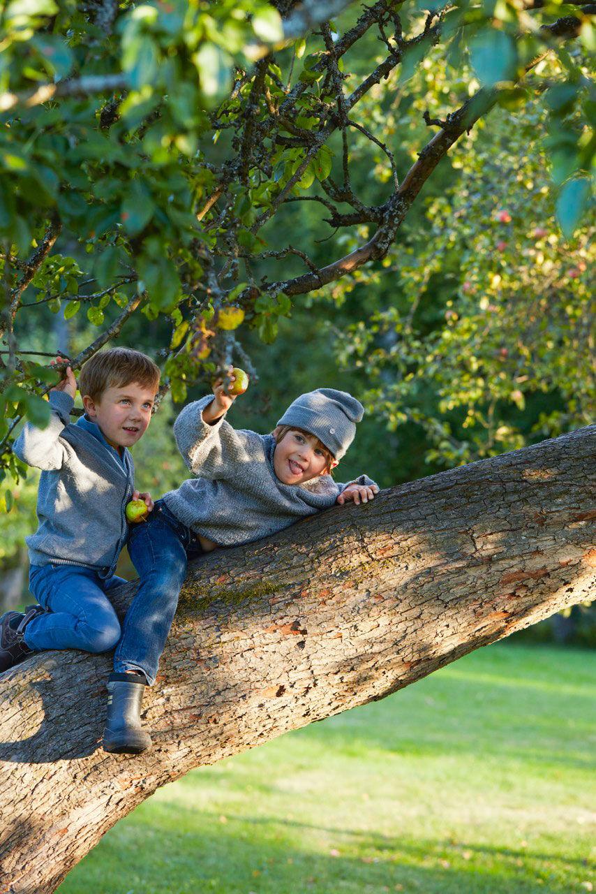Två pojkar som leker i ett äppelträd