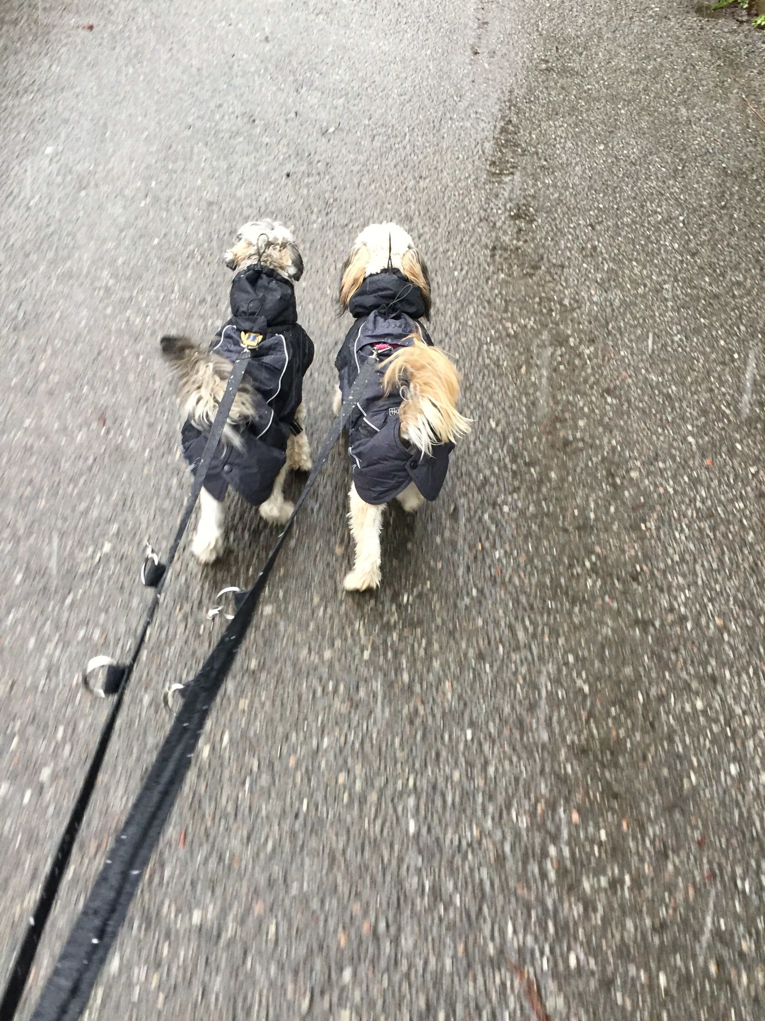 Man kommer verkligen ut i ur och skur. Hunden är en perfekt kompis att ta med sig på joggingrundan. Och den gör den annars rätt enformiga morgonpromenaden mycket roligare.